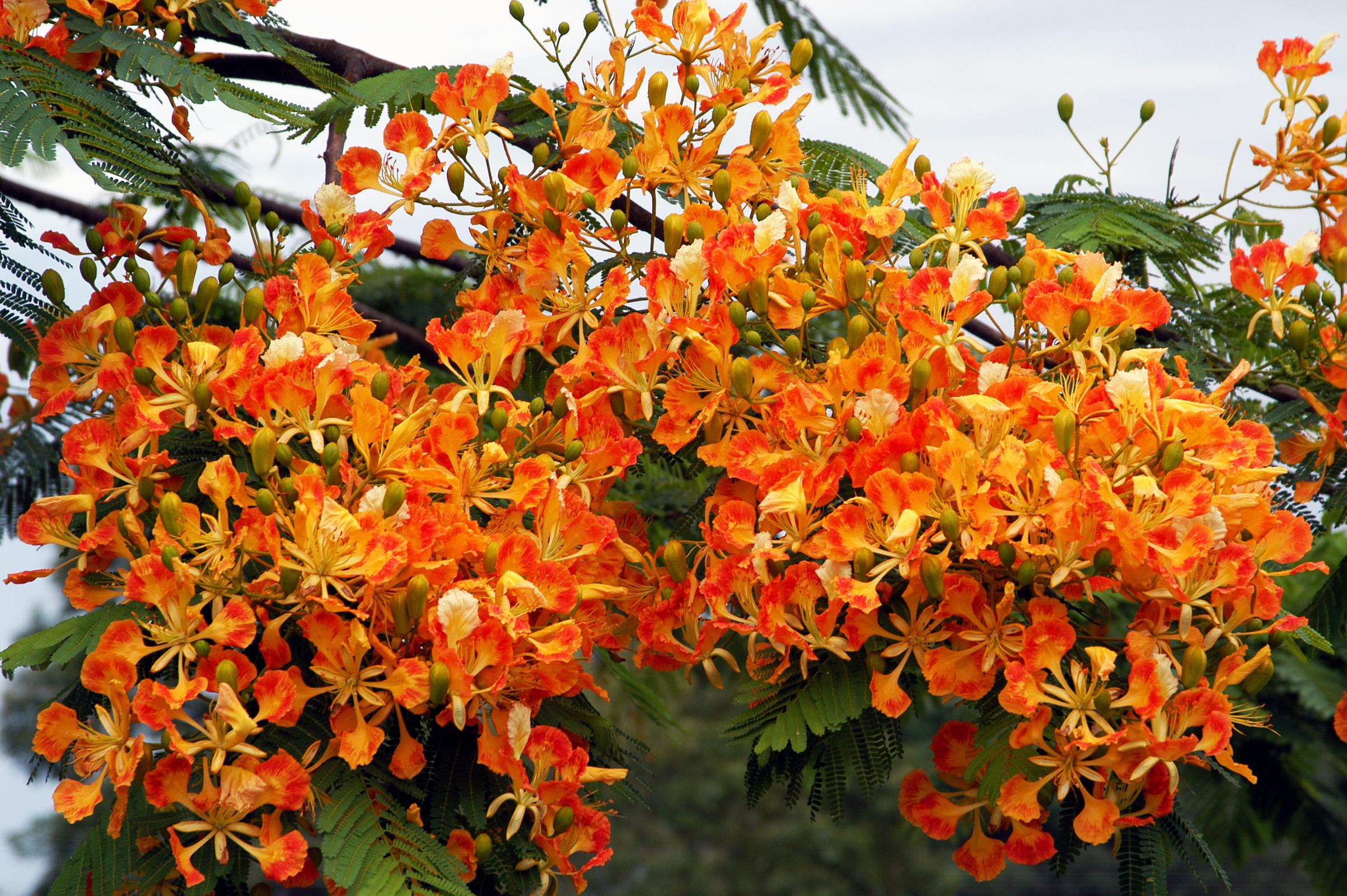 Növények (Brazília)