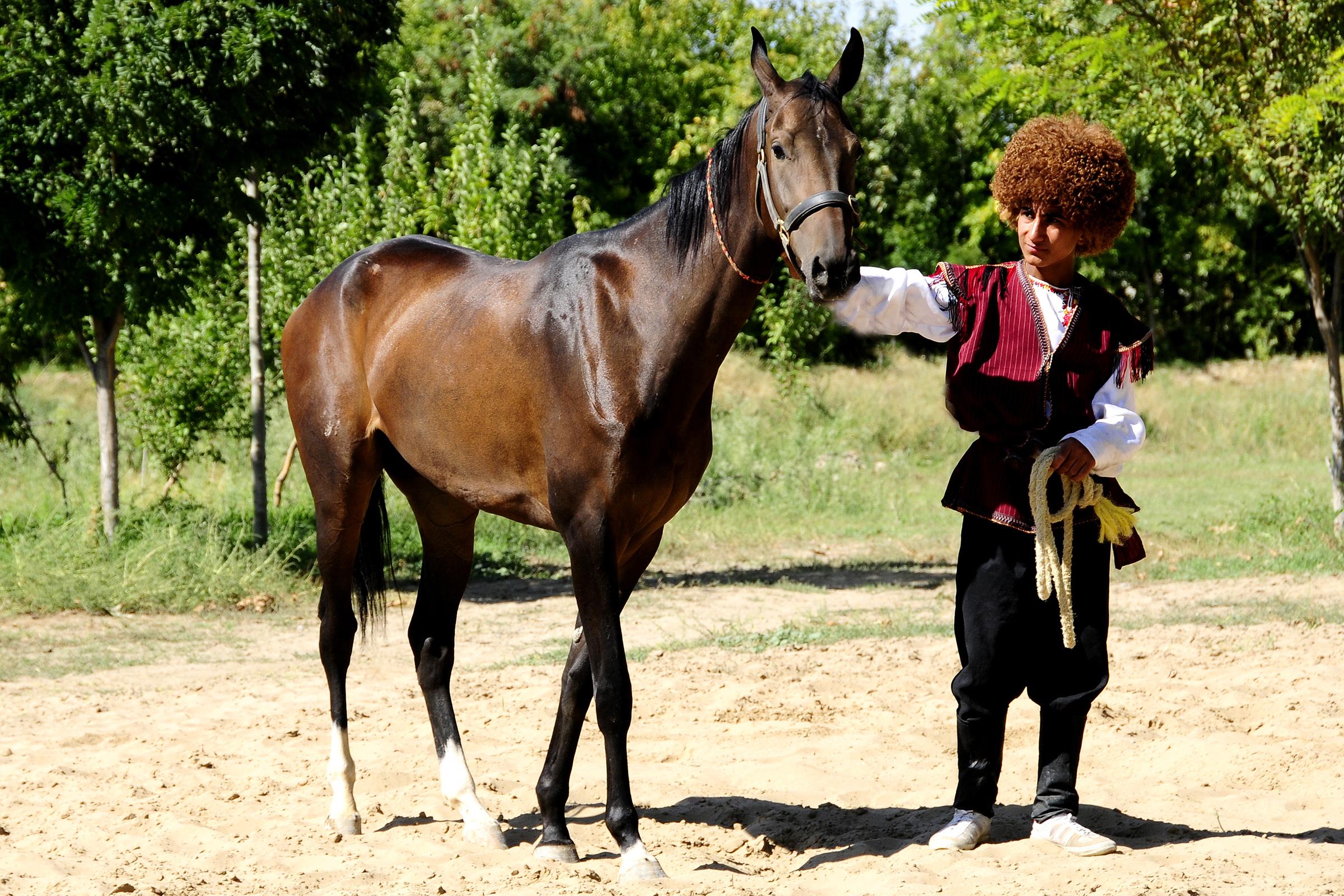 Türkmén lovak