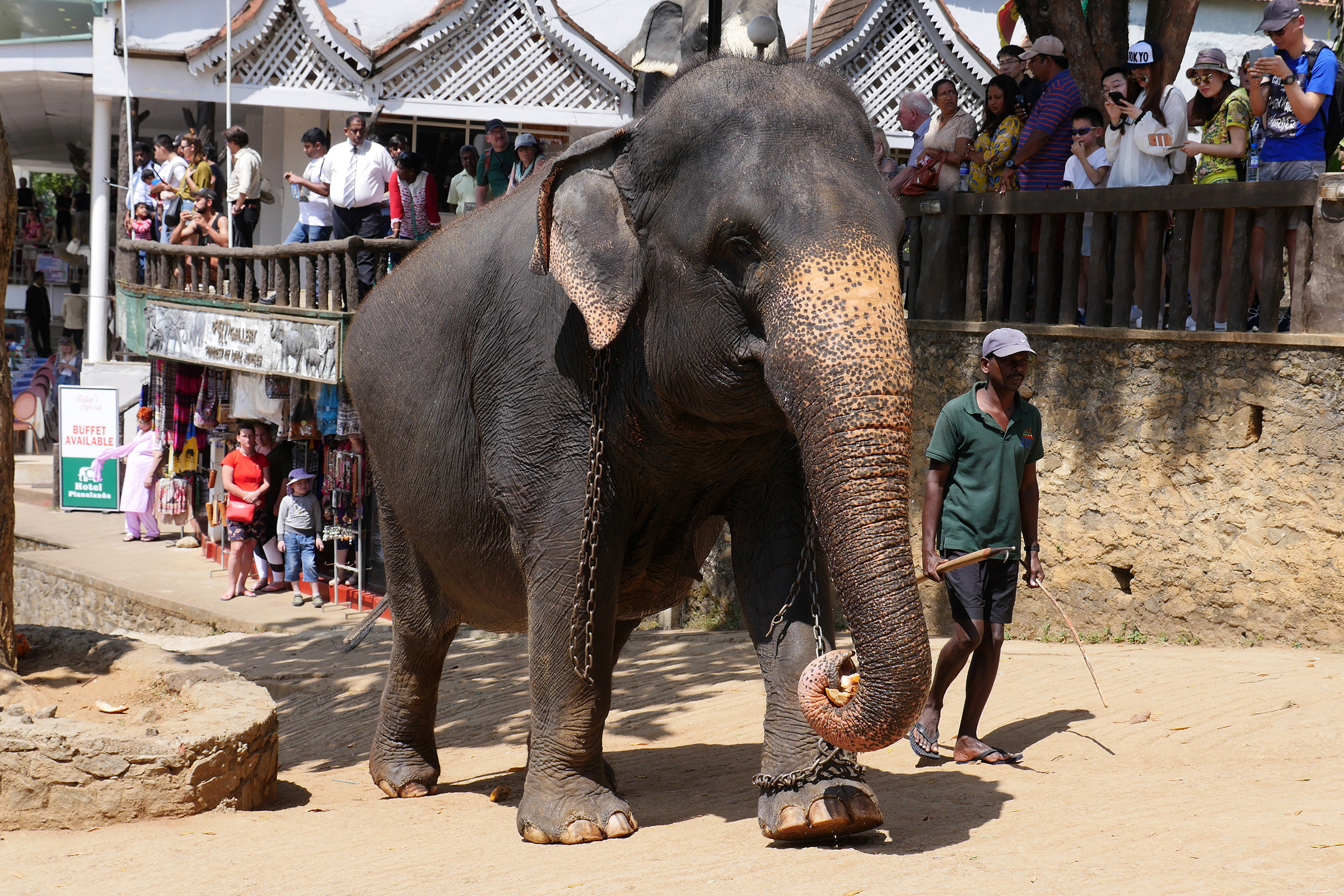 Állatok (Sri Lanka)