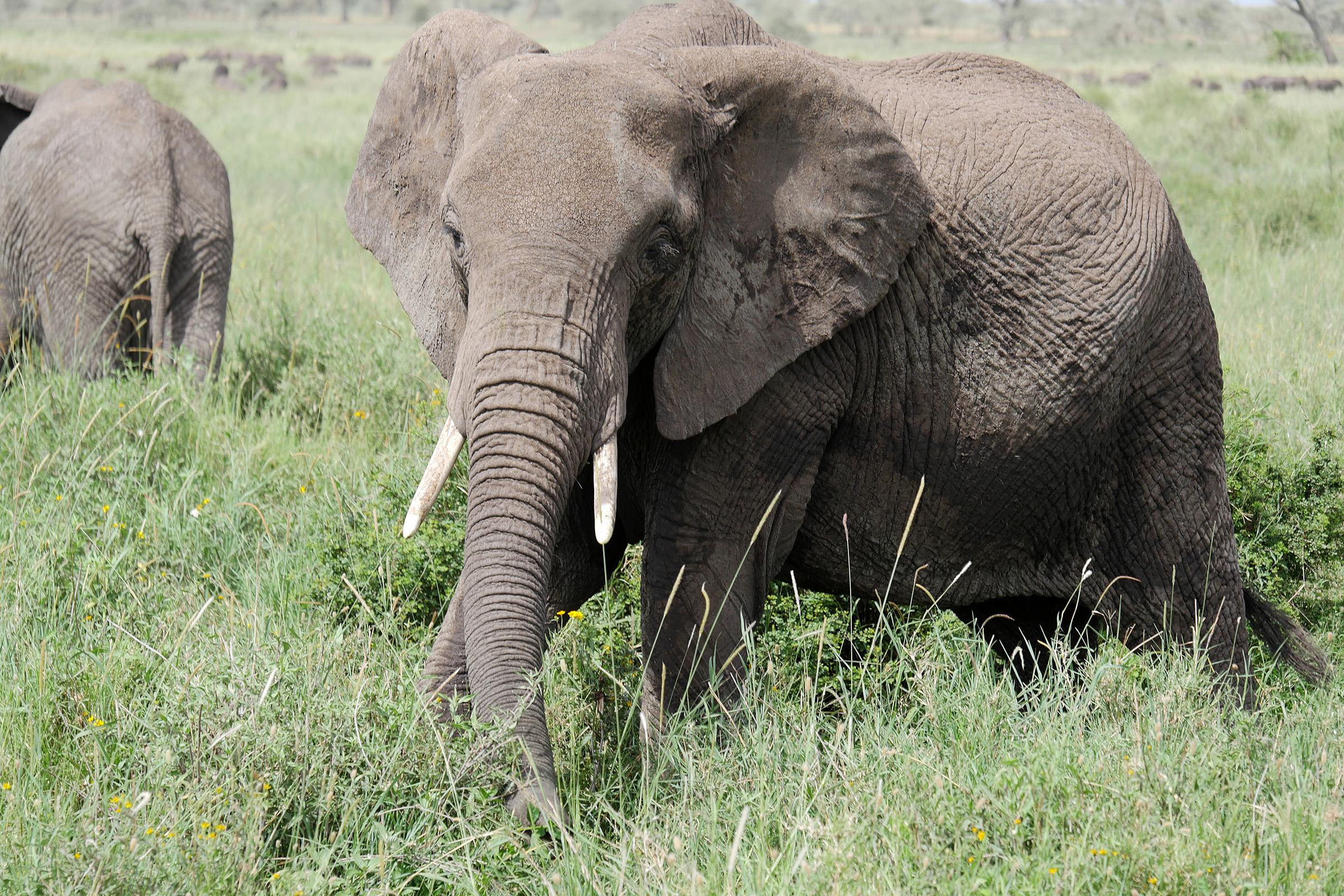 Állatok (Tanzánia)