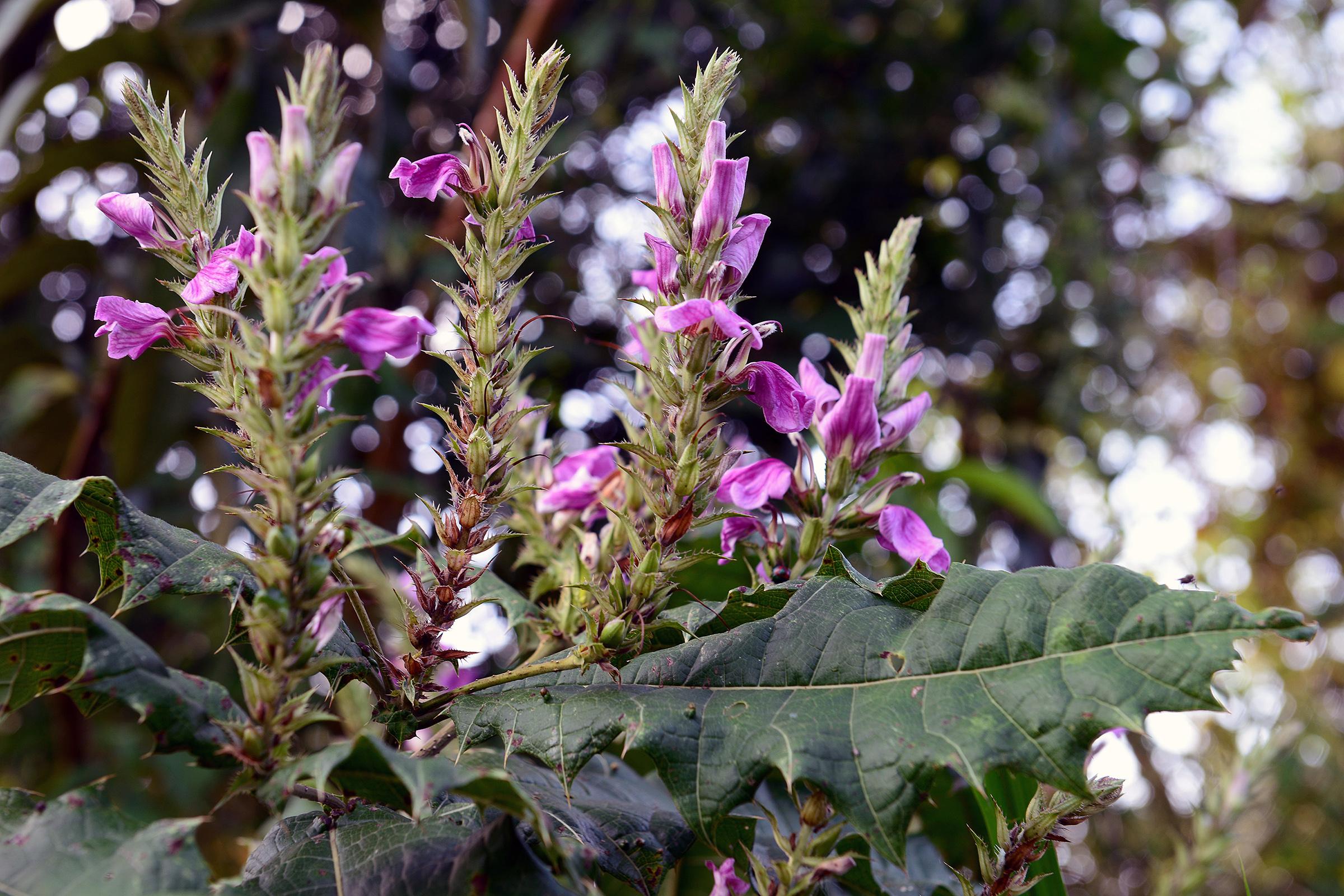 Növények (Uganda)
