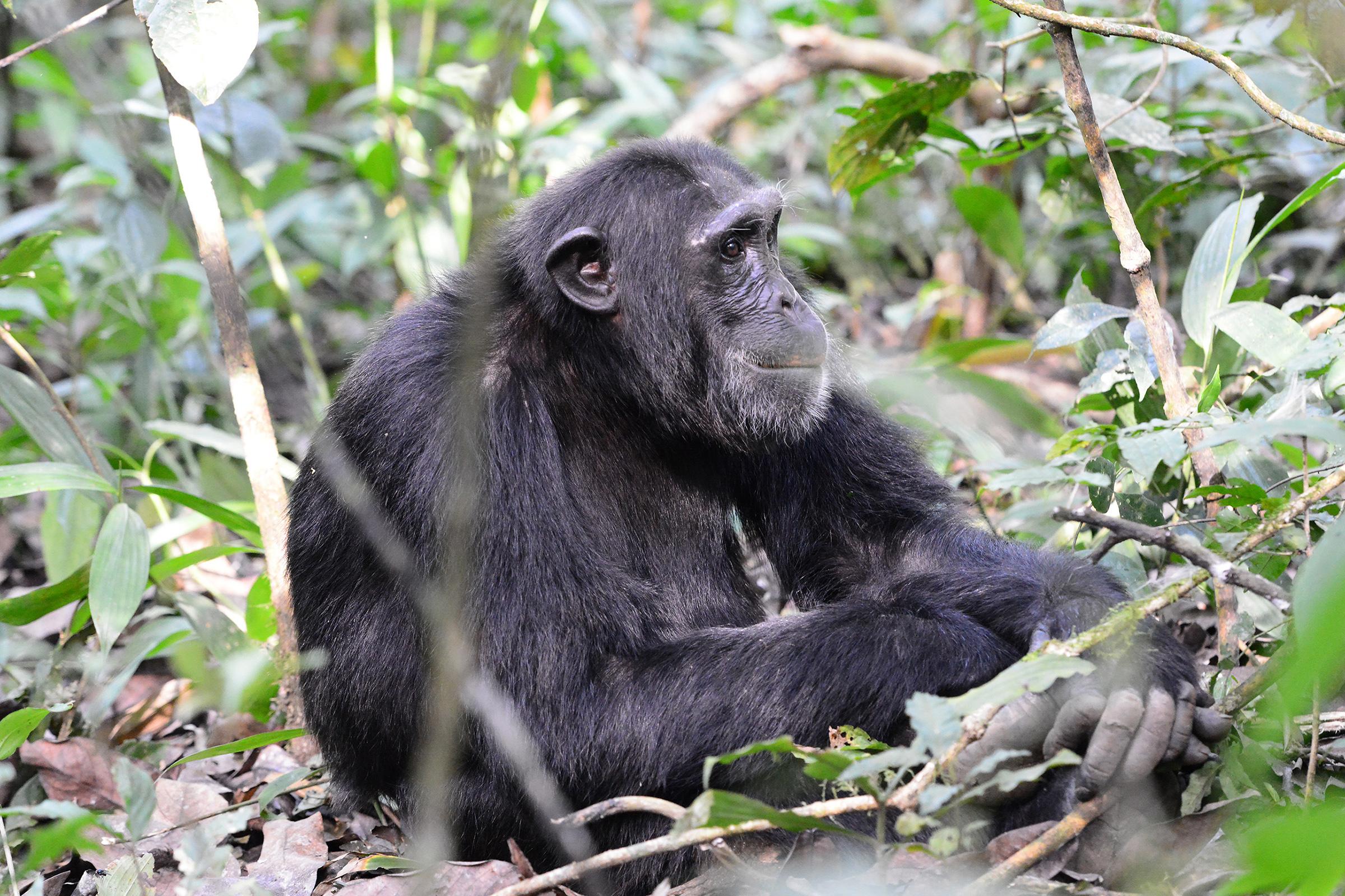 Állatok (Uganda)